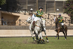 Polo Match Stock Foto
