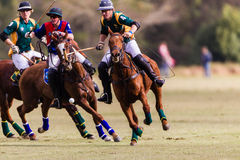 Polo Match Riders Chasing Action Stock Photography
