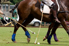 Close up of Polo Players. Contesting for the ball stock photography