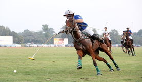 POLO MATCH AT JAIPUR POLO GROUND, NEW DELHI. Two players disputing the ball in a polo match. It's a team sport played on horseback. The objective is to score Royalty Free Stock Photos