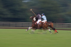 Polo Match. Panning shot of fast moving horses and riders at a Polo match moving towards the ball Royalty Free Stock Photography
