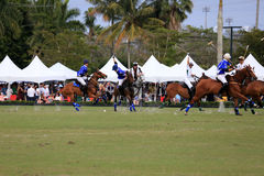 Polo Match Stock Photography