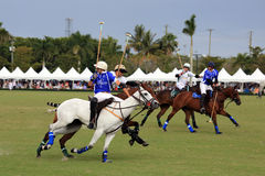 Polo Match Stock Images