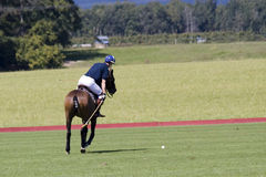Polo player. About to hit a ball Stock Images