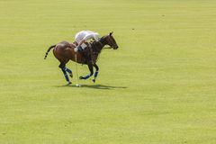 Polo player. Argentine cup. Dublin. Ireland Royalty Free Stock Photography