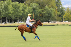 Polo Player Argentinsk kopp dublin ireland Royaltyfria Bilder