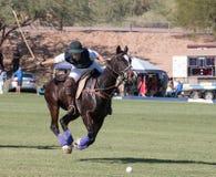 Polo Player e Polo Pony Horse Immagine Stock Libera da Diritti