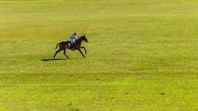 Polo Player Horse Field Action équestre photo stock