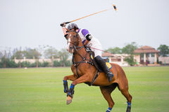 Polo player. And horse In Games Stock Image