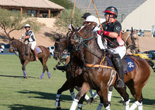 Polo Player and Polo Pony Horse Stock Images