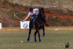 Polo Player Pony Action Balance Fotografía de archivo