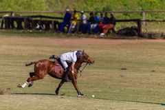 Polo Player Pony Action Balance Royalty Free Stock Images