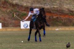 Polo Player Pony Action Balance Stock Photography