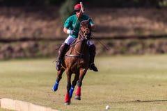 Polo Player Pony Action Balance Royalty Free Stock Photos