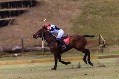 Polo Player Pony Hit Ball-Aktion Stockfotografie