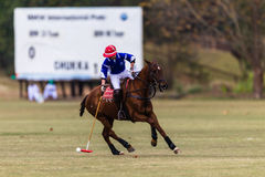 Polo Player Pony Play Action Photo libre de droits
