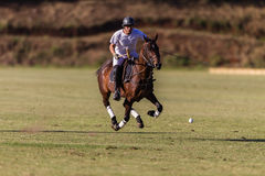Polo Player Pony Gallop Ball Stock Photo