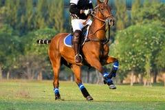 Polo Player Riding un caballo fotografía de archivo libre de regalías