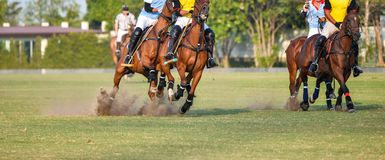 Polo player in tournament. Horses are running in polo tournament Royalty Free Stock Photos