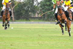 Polo players. Stock Images