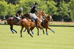 Polo players. Argentine cup. Dublin. Ireland Royalty Free Stock Photos