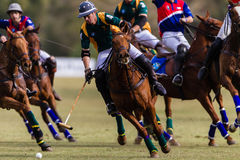 Polo Players Close Focus Action foto de stock