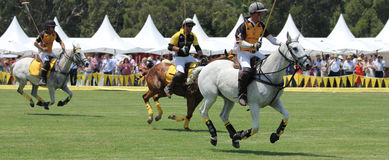 Polo Players and Horses. SYDNEY, AUSTRALIA, NOVEMBER 17: Polo players competing in the Polo in the City, Australia's only national polo series held at Centennial Royalty Free Stock Photos