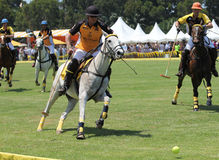 Polo Players and Horses Stock Images