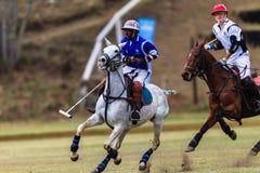 Polo Players Ponies Balance Fotografia Stock Libera da Diritti