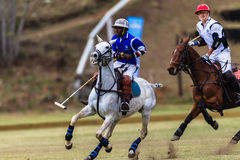 Polo Players Ponies Balance Royalty Free Stock Photo