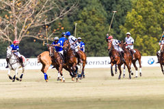 Polo Players Ponies Blue White  Royalty Free Stock Images