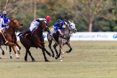 Polo Players Ponies Challenge Possesion Royalty Free Stock Images