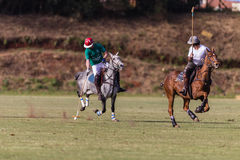 Polo Players Ponies Gallop Stock Image