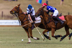 Polo Players Ponies Galloping Ball stock fotografie