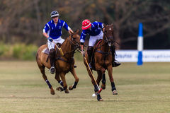 Polo Players Ponies Game Action Fotografia Stock