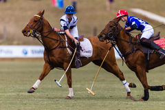 Polo Players Ponies Play Ball Arkivbild