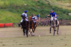 Polo Players Ponies Team Play Fotografia Stock Libera da Diritti