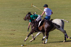 Polo Players Pony Game Play Royalty Free Stock Photography