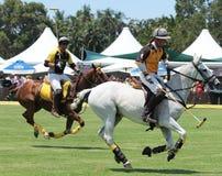 Polo Players y caballos Imagen de archivo