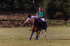 Polo Riders Pony Action Balance Royalty Free Stock Photo