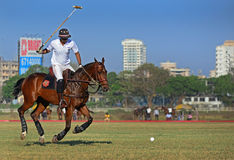 Polo Playing Royalty-vrije Stock Afbeelding