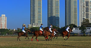 Polo Playing Royalty-vrije Stock Fotografie