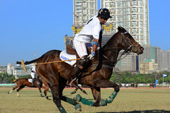 Polo Playing Royalty Free Stock Photos