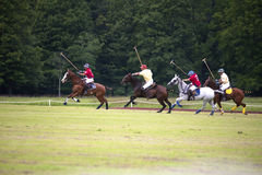 Polo Ponies Stock Photography