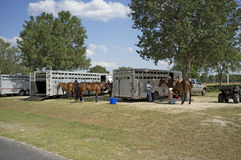 Polo ponies grooms and horse boxes Stock Photo