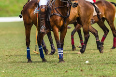 Polo Ponies Players Action Arkivbild