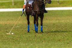 Polo Pony Player Action Stockfotos