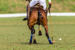 Polo Pony Player Action Stockfoto