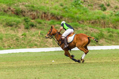 Polo Pony Player Action Royalty Free Stock Photo