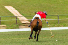 Polo Pony Woman Player Action Royalty Free Stock Photography
